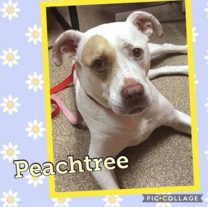 Peachtree is a 10 year old terrier and has been with us for six years She loves life at The