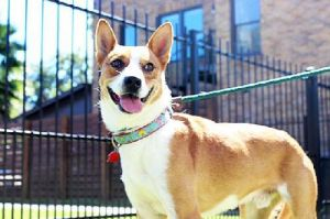 Meet Chevy Chevy is a sweet little guy who had been living on the street all alone until a Scouts