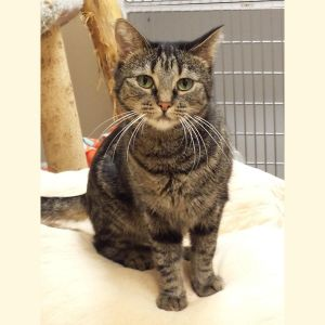 Glory is a petite female tabby that along with her mother Sweetie and siblings Blackie and Maris