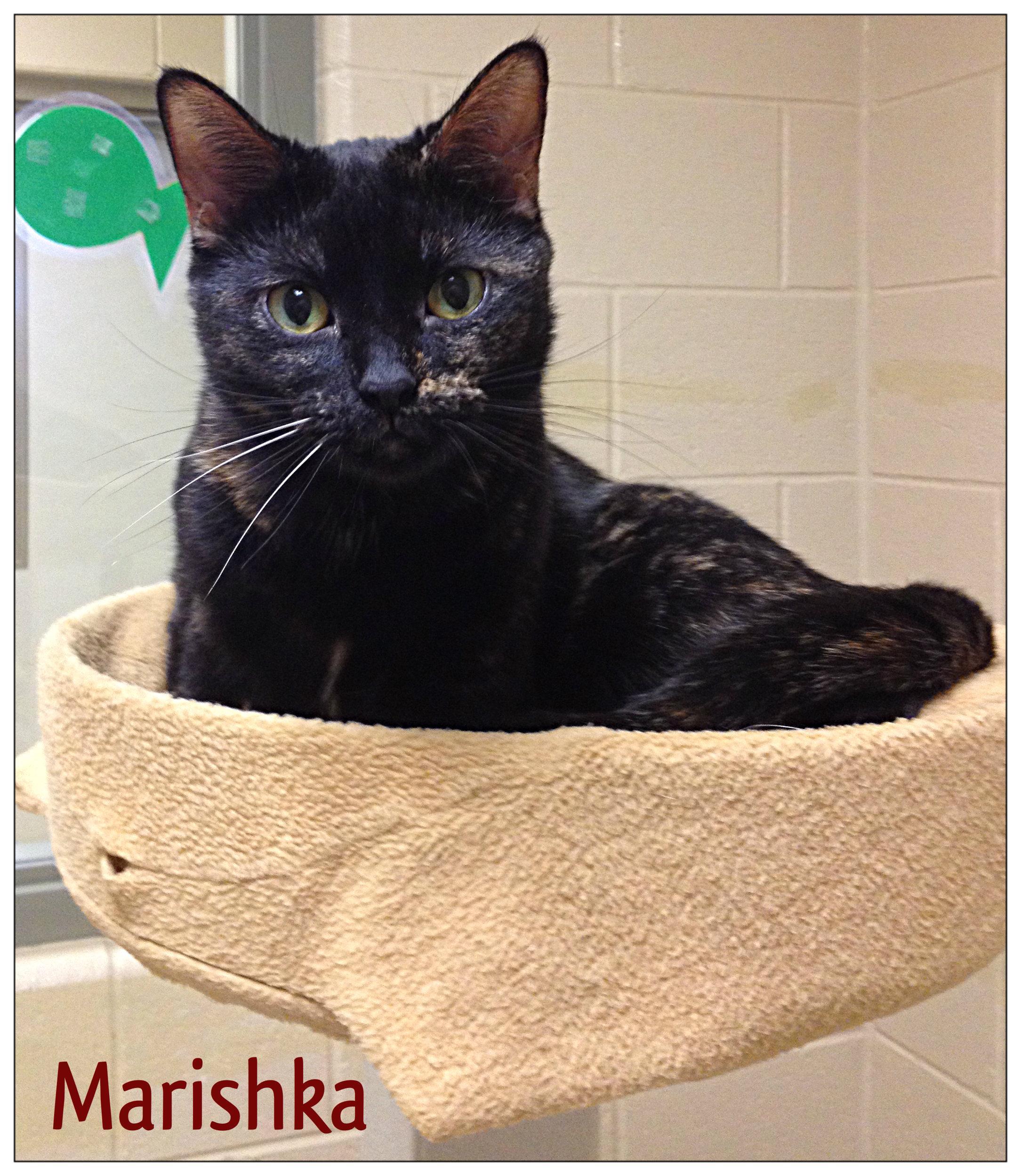 Marishka-has been ADOPTED!!!