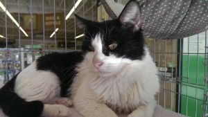 Beau - I'm a sweet quiet boy who needs my own family!