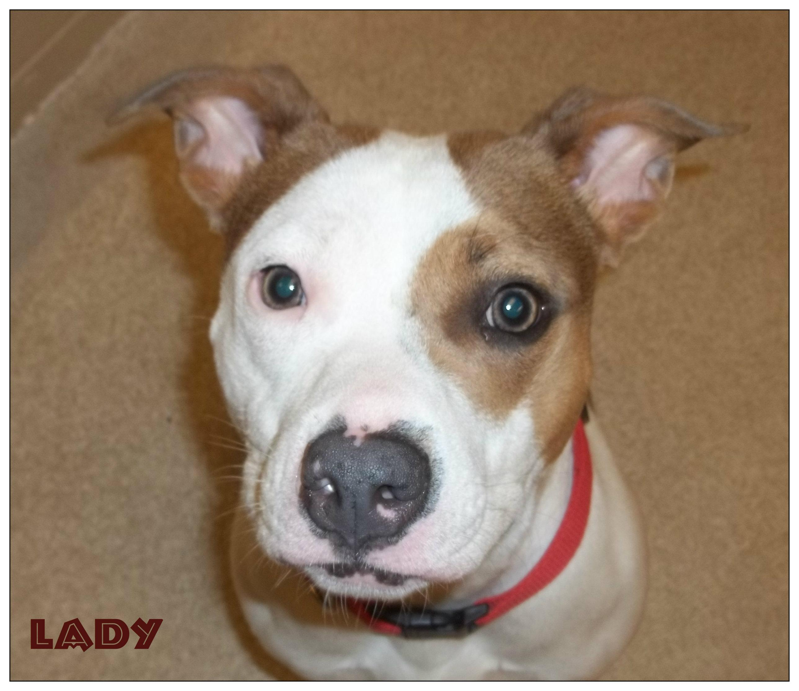 Lady-has been ADOPTED!!!!!