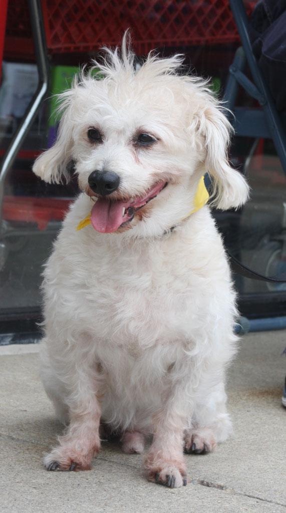 Adopted! Shaun 2
