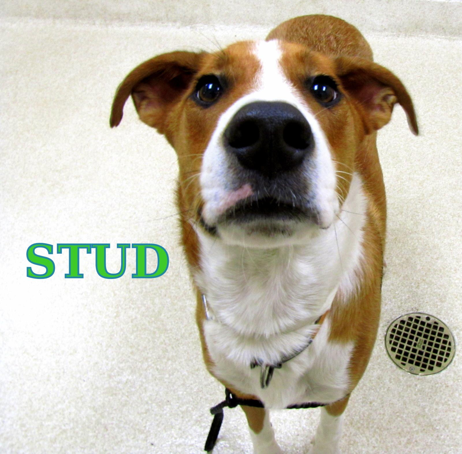 Stud-has been ADOPTED!!!
