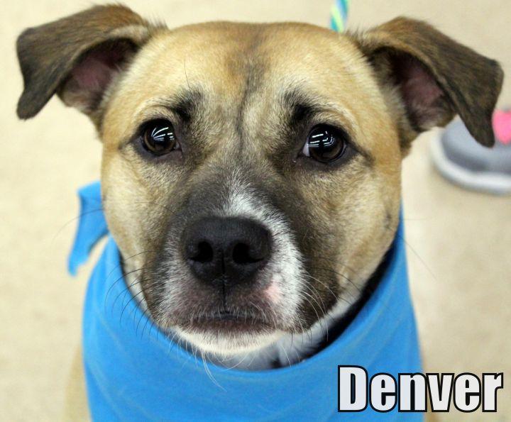 A..  Denver 1