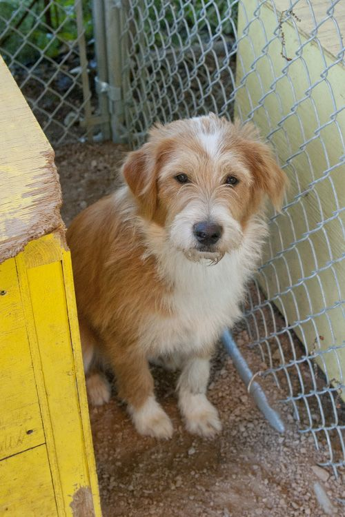 Shila, an adopted Terrier Mix in Fort Smith, NT