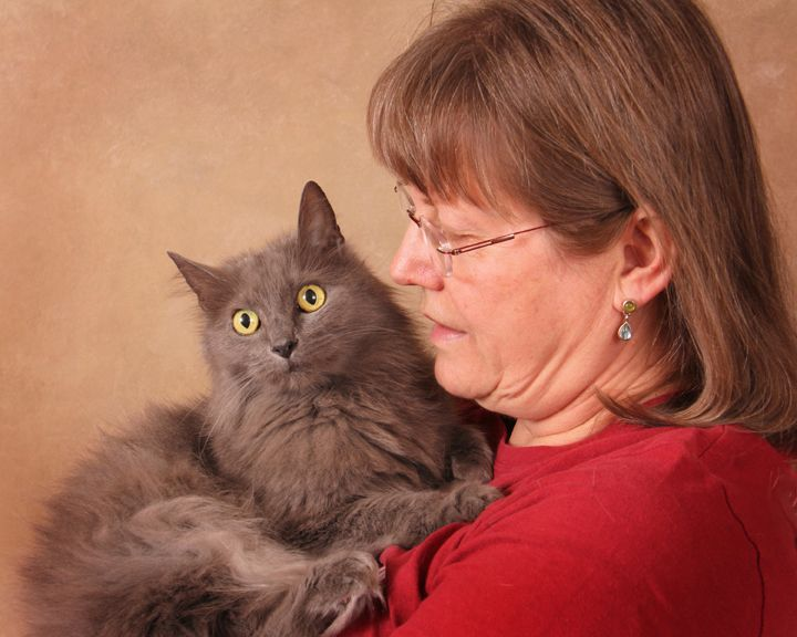 Katy, an adopted Nebelung & Russian Blue Mix in Nashville, TN