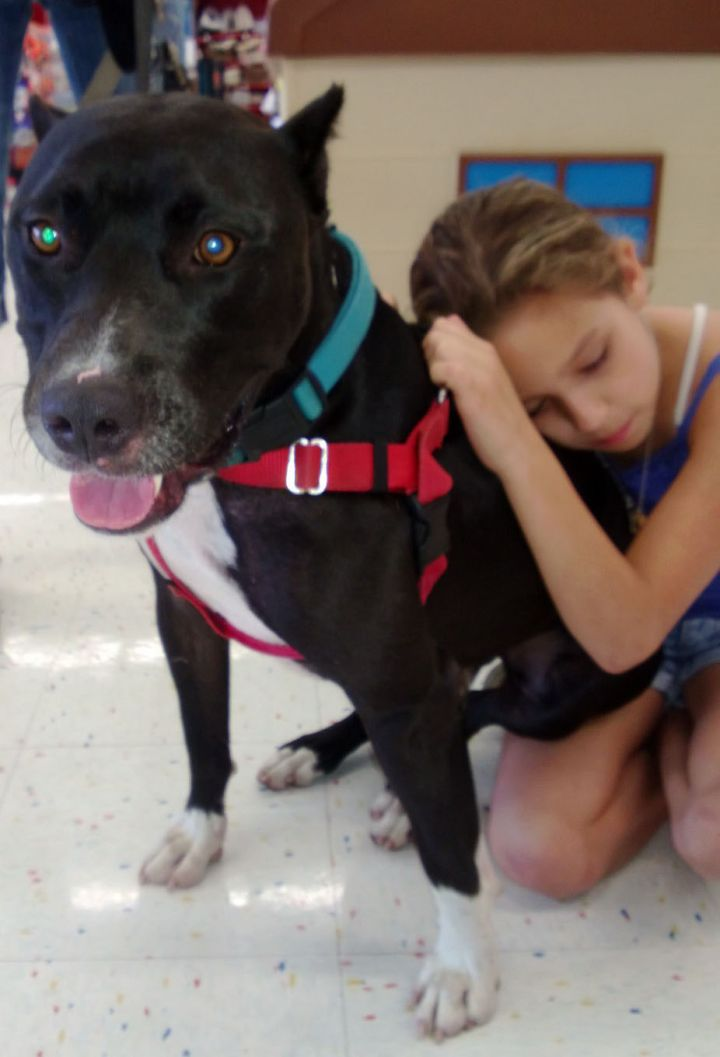 Pittie Cent, an adoptable Pit Bull Terrier in Cypress, TX