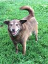 Norwegian Elkhound Dog: Hanna / Video
