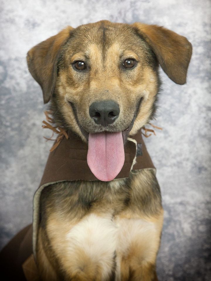KLAUS - ADOPTED!!!!!!!!!!!!!!!!!!!!!, an adopted Labrador Retriever in Nashville, TN