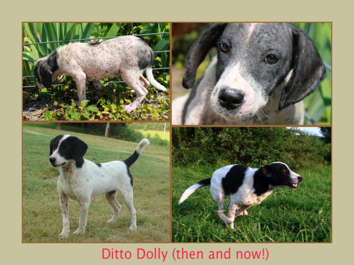 Ditto Dolly (You've Come a Long Way Baby! Cotton Soft coat) 3
