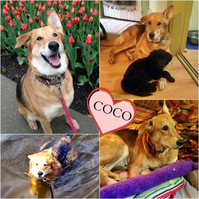 Coco - adoption pending