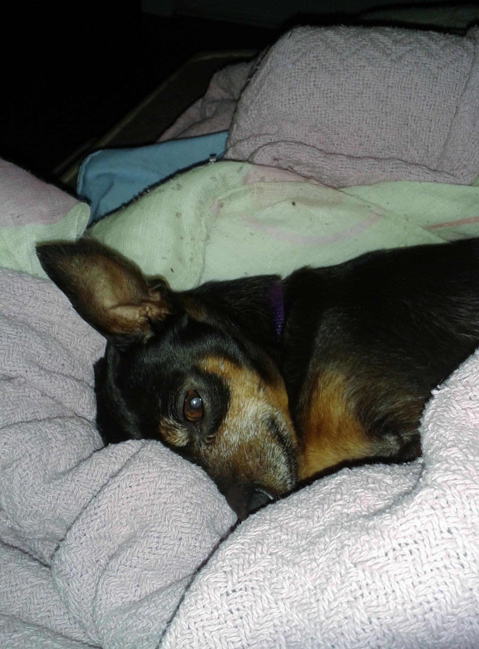 Penny - super sweet older girl