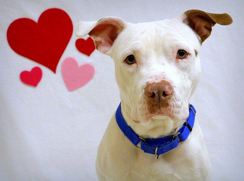 Chester-has been ADOPTED!!!
