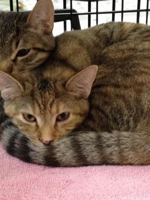 Sweet and loving and in need of a wonderful loving home to call its own Her mother is having multi