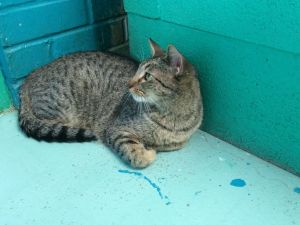 I am a great cat I like people and like to play inside and outside My favorite place is up