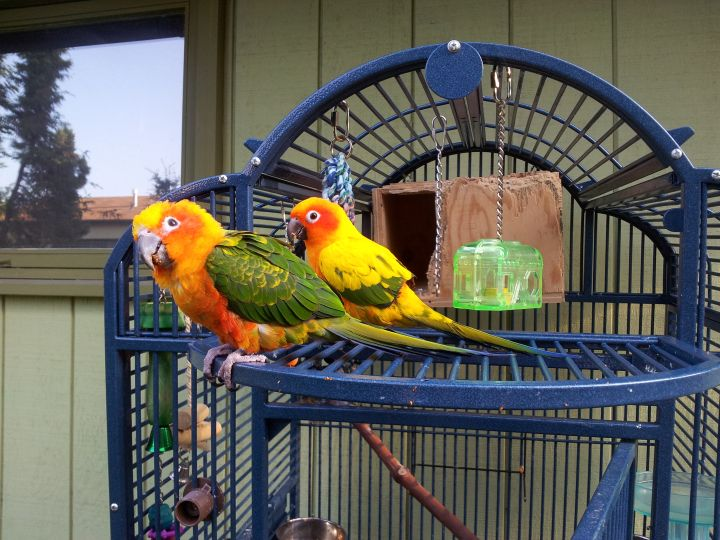Sol and Mango 1