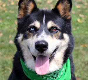 Shiloh: Adopted!