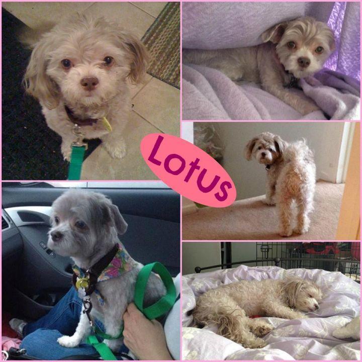 Lotus - ON HOLD 1