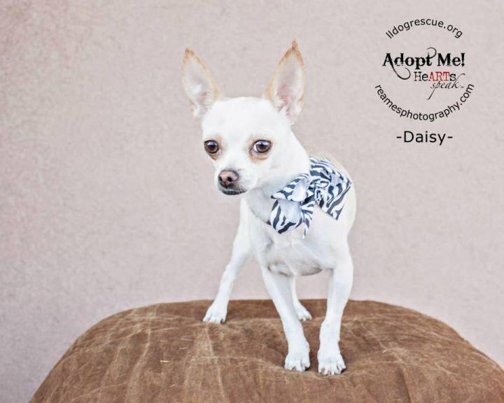 Princess Daisy 1
