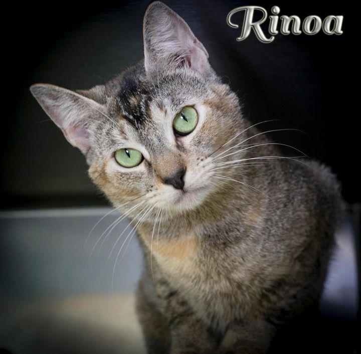 Rinoa 1