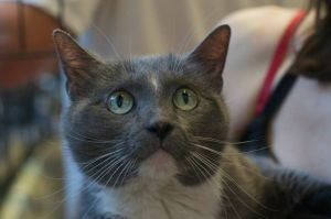 Hayley Rose is a lovely cat with a lovely name She was born around 5706 was found as a stray