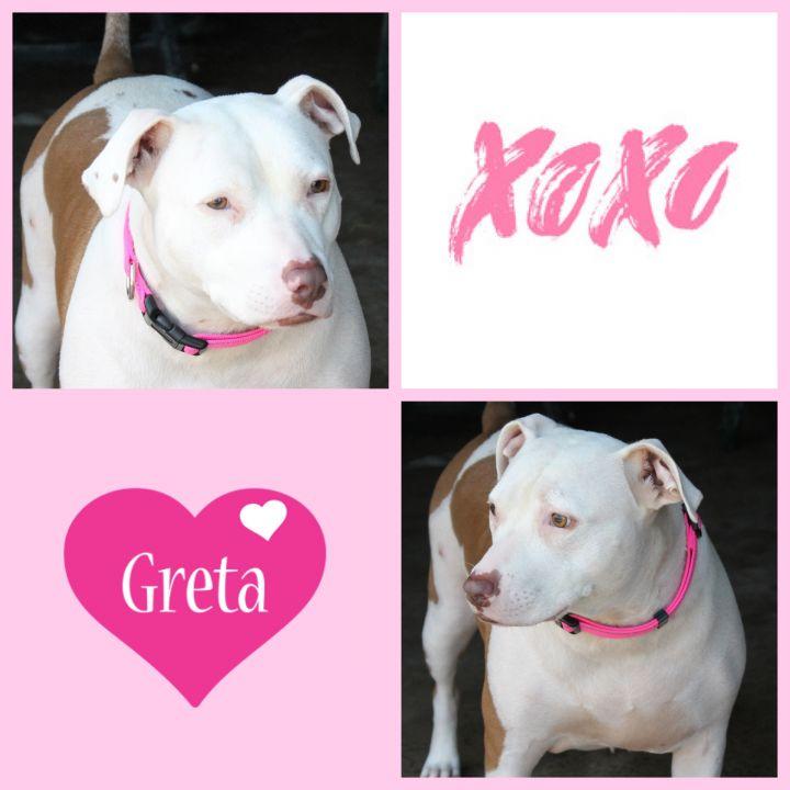 Greta 4
