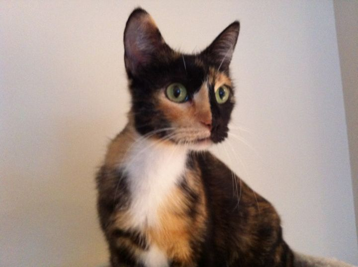 Sasha - I am super sweet and love to climb! 1