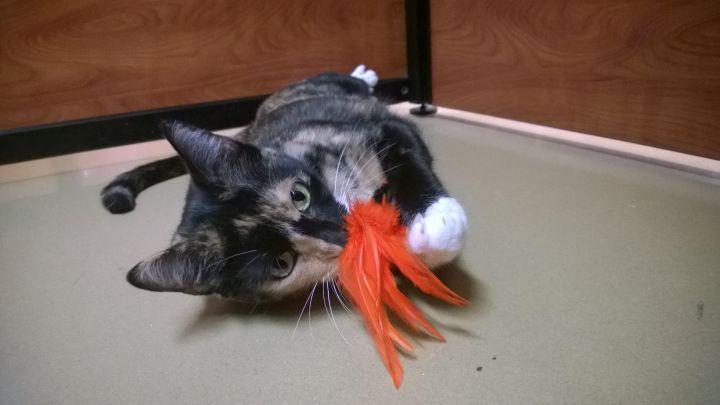 Sasha - I am super sweet and love to climb! 3
