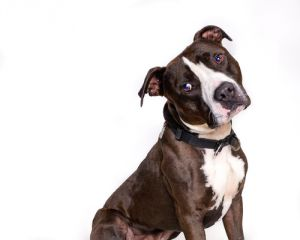 No description providedKai American Staffordshire Terrier has been shared from