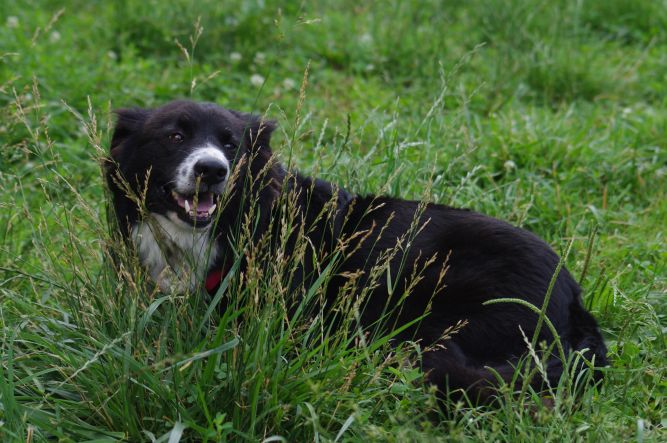 Matty - Sanctuary dog