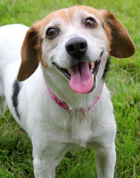 Janis: Adopted! 1