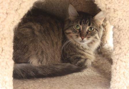 Fluffy **IN FOSTER CARE**