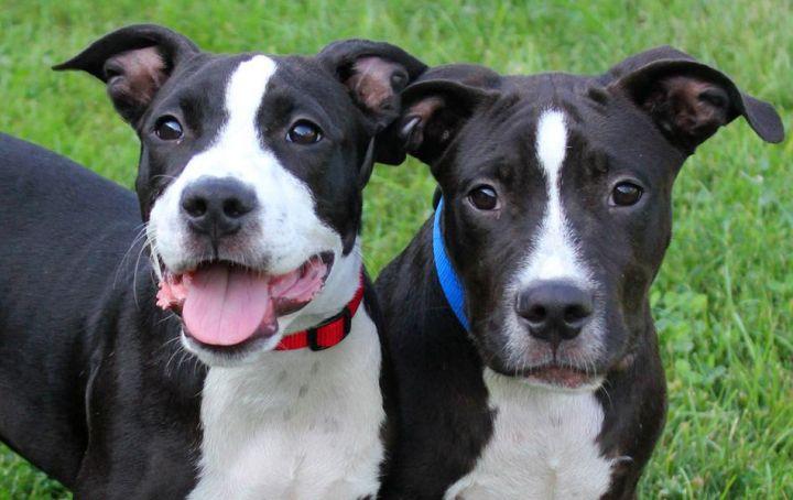 Denver & Dakota: Adopted! 1