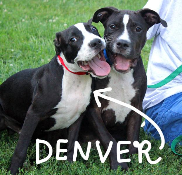 Denver & Dakota: Adopted! 2