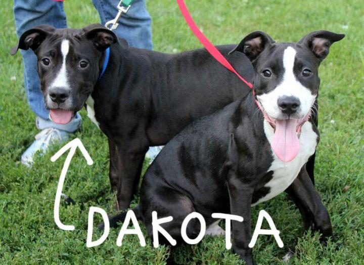 Denver & Dakota: Adopted! 3