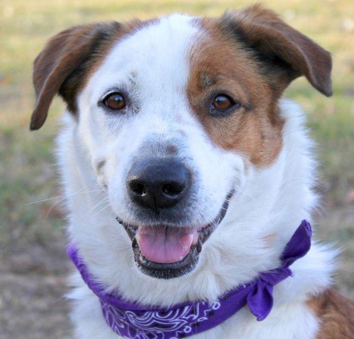 Dooney: Adopted! 1