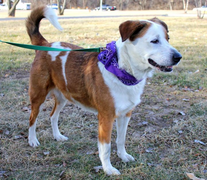 Dooney: Adopted! 3