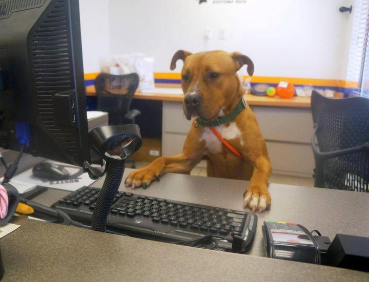 Zayn (Happy & Dog Friendly Boy, Excellent Jogging Buddy) - FOSTER 3