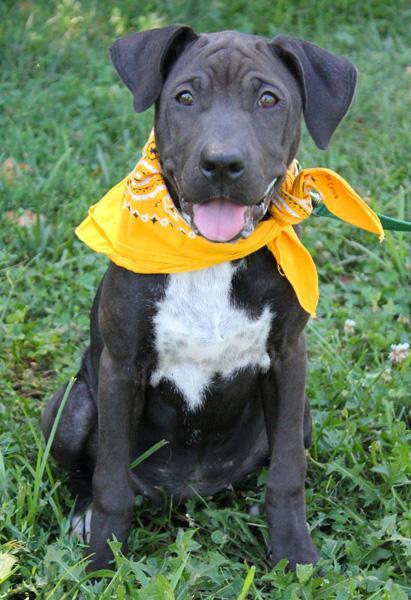 Mischa: Adopted! 2