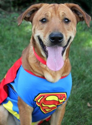 Max: Adopted!!!