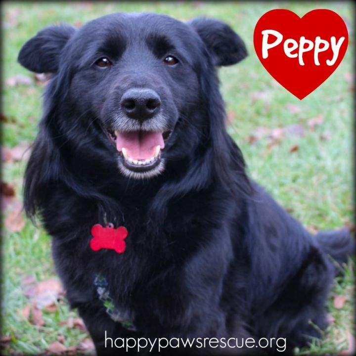 Peppy 3