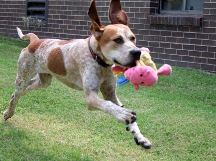 Farley: Adopted!!!!! 2