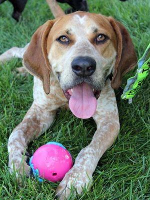 Farley: Adopted!!!!!