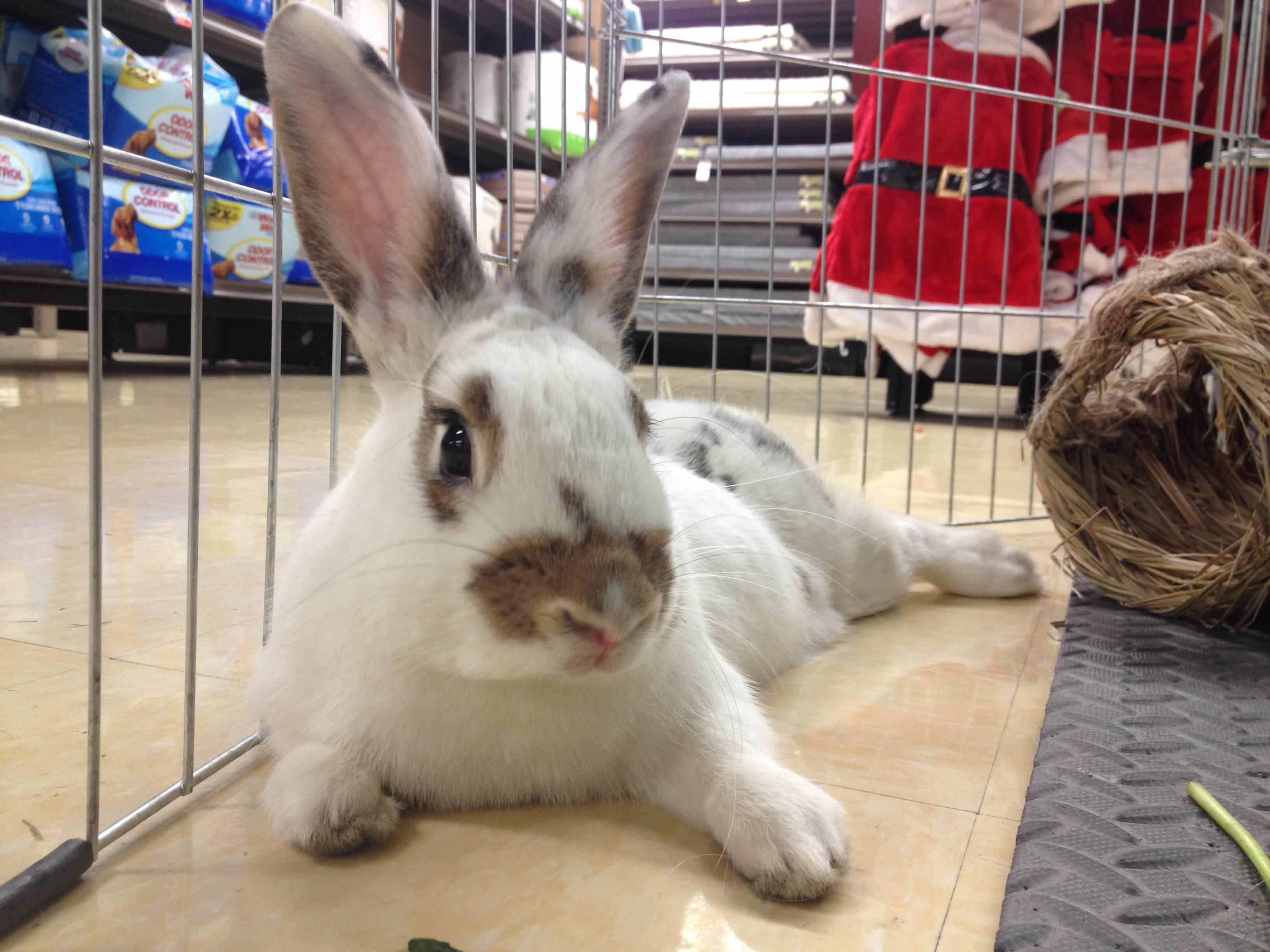 Benny Bunny