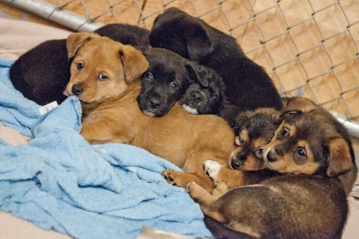Litter of 5 pups for adoption 2
