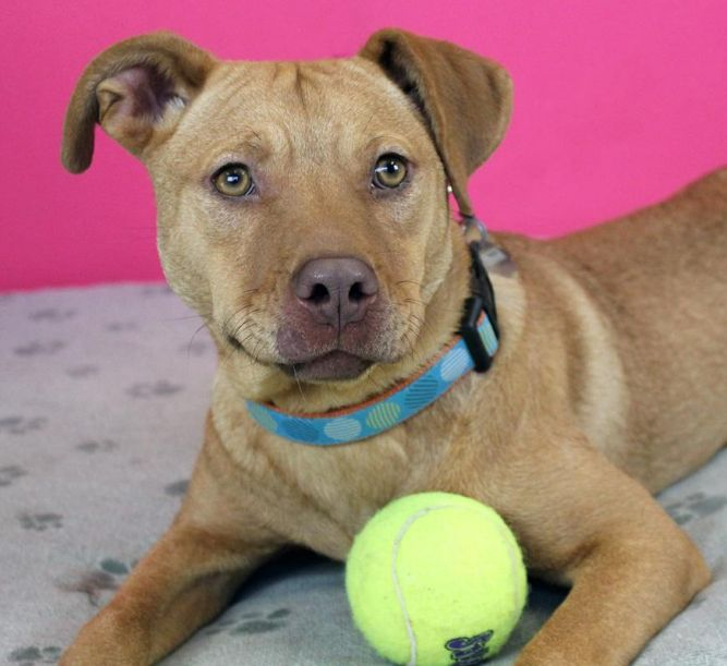 Aubrey: Adopted!