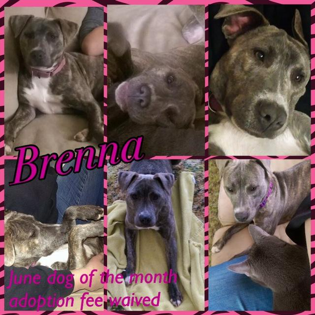 Brenna- June Dog of the Month!