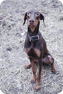 Max-Adopted! 3