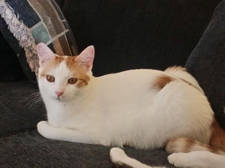 47bf0f1783 Cat for adoption - Sunny-side